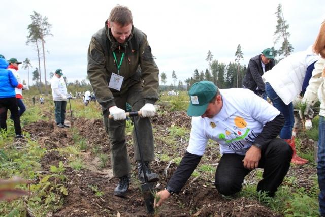 В 2018 году красноярские леса планируют восстановить на площади 62 тыс. га