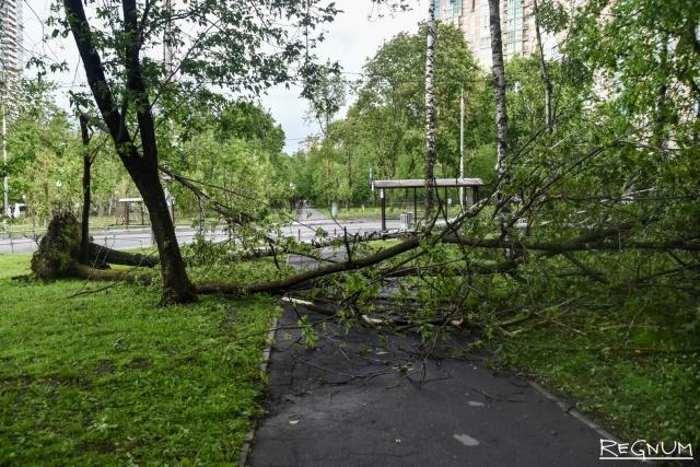 В Чехии ураган вызвал массовые аварии на электросетях