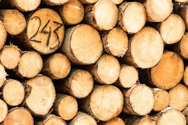 Медведев призвал экспортировать мебель и картон, а не круглый лес