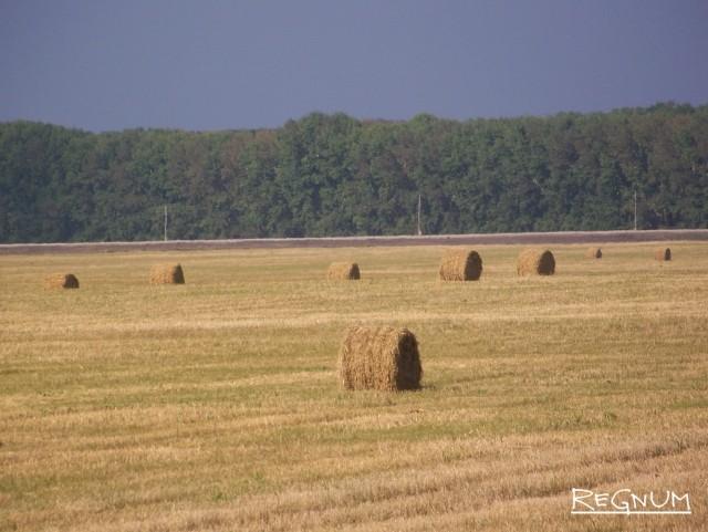 Грабёж: цена пшеницы в Сибири вдвое ниже, чем на Юге России