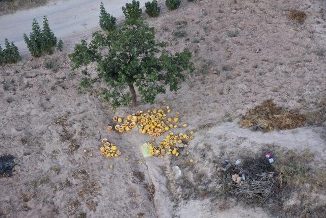 Остатки летнего урожая. Каппадокия. Турция