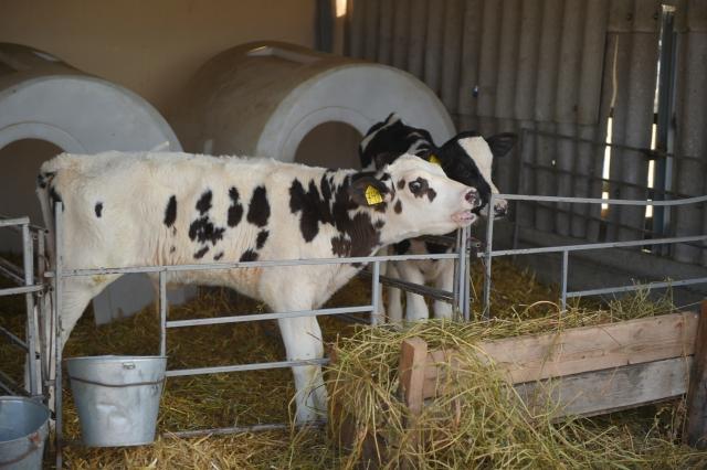 Адыгея вошла в число лидеров по качеству молока