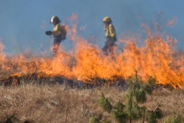 Штормовой ветер раздул пожары в Алтайском крае