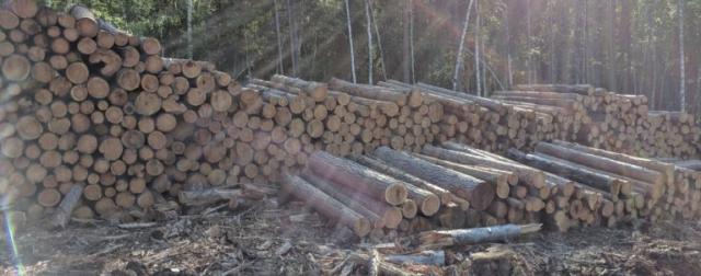 По-чёрному: врут и рубят. В Иркутской области уничтожили леса на 4,6 млрд