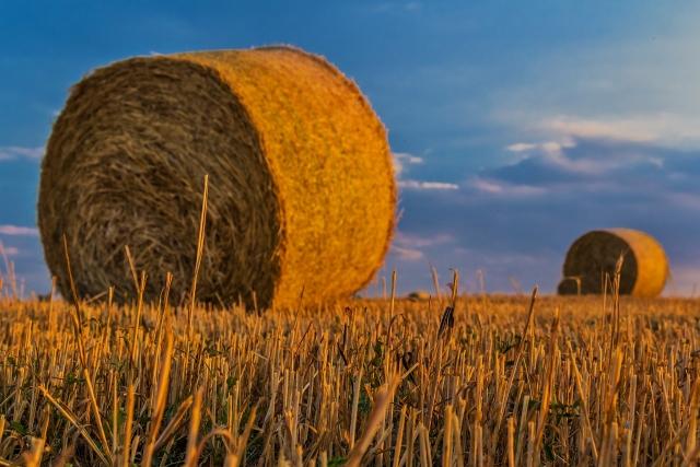 Орешкин: В России может сократиться объем сельхозпроизводства