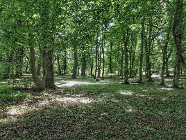 Самурский лес