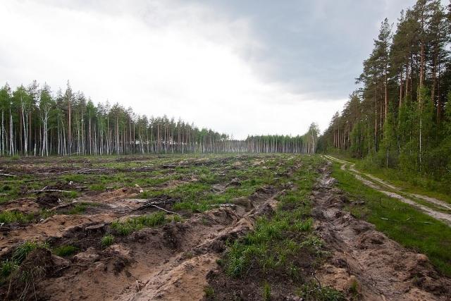 Китай планирует арендовать 150 тыс. га земли в Красноярском крае