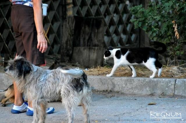 Строительство приюта для бездомных животных в Симферополе затягивается