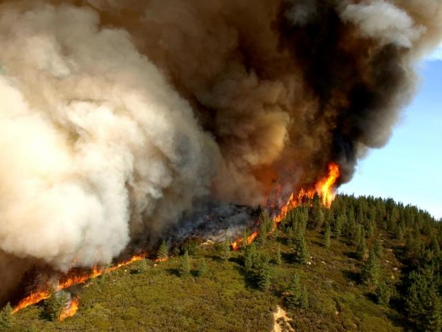 Власти Калифорнии объявили эвакуацию из-за лесных пожаров