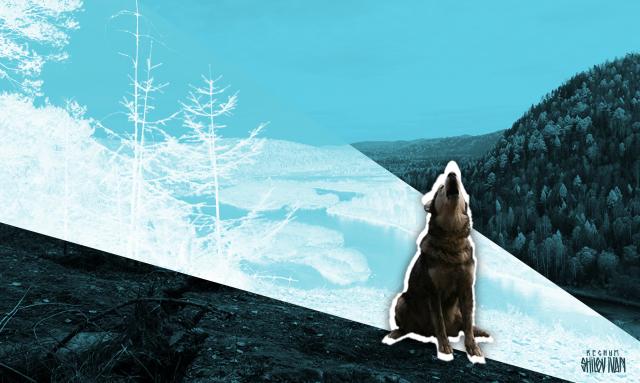 Кто следующий, или Почему Бурятия и Забайкалье — не последняя потеря Сибири
