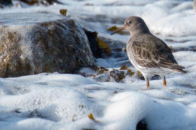 Орнитологи МГУ рассказали об экологической ловушке для птиц в Арктике