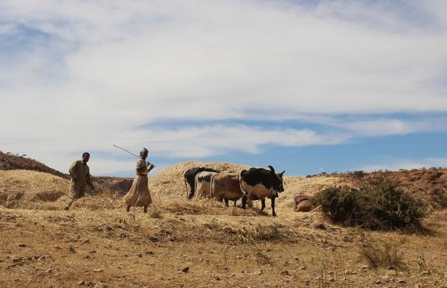 Совбез ООН снял санкции с Эритреи