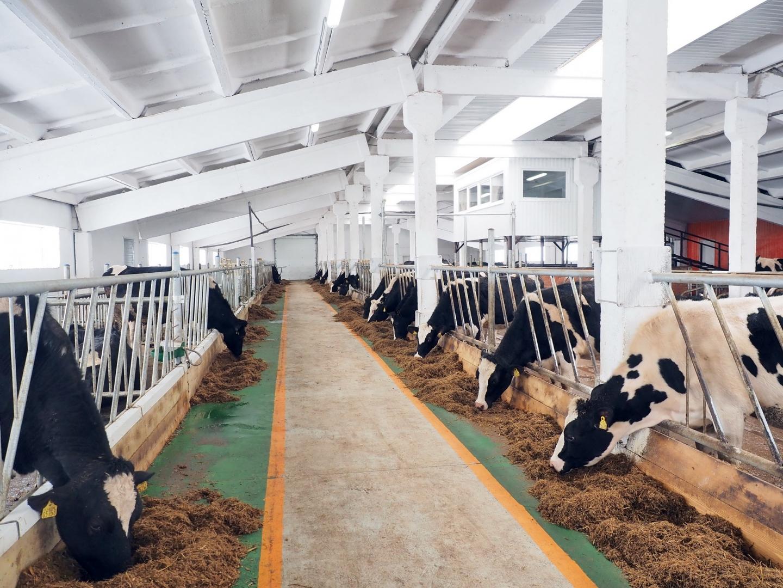 Страусиная ферма курган официальный сайт фото анне