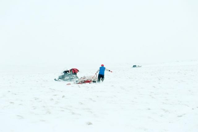 Алексей тащит тушу оленя к снегоходу
