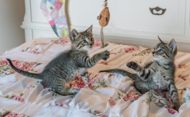 Игра с котятами