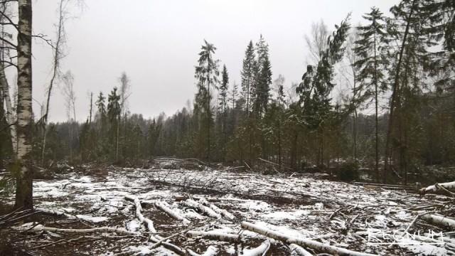 В Ярославской области лесорубов подозревают в уклонении от уплаты налогов