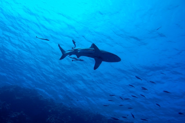 В австралийском штате закрыли пляжи после нападения акулы