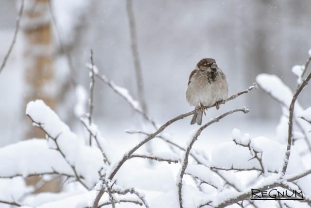 Снегопады в Чувашии может сменить 20-градусный мороз