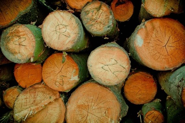 За 2018 год лесам Приангарья нанесён ущерб в сумме более 4,5 млрд рублей