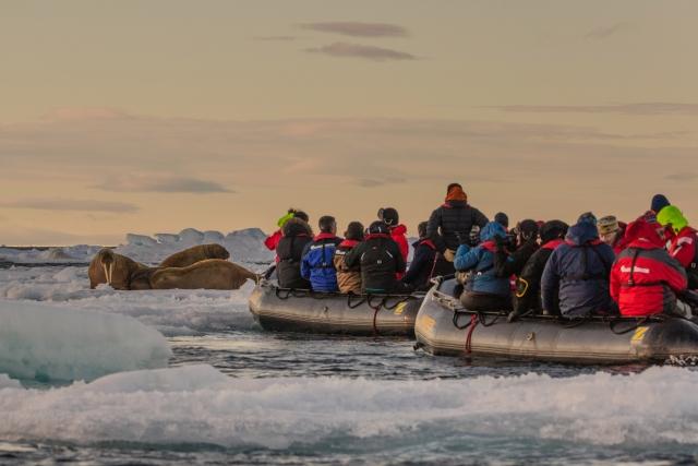 Важно сохранять безопасную дистанцию и не беспокоить моржей. Защищаясь, они могут пробить лодку своими бивнями
