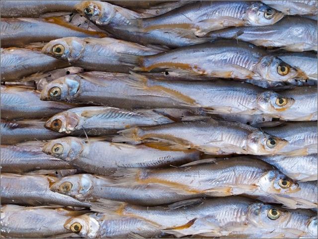 Японские СМИ считают, что рыбная отрасль России восстанавливается