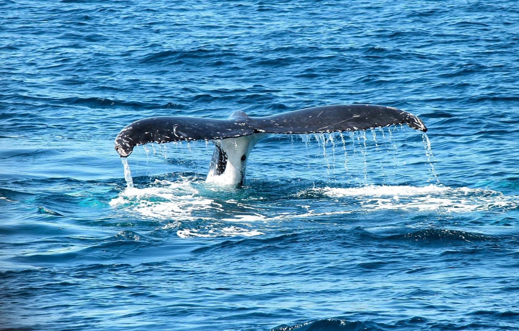 Самого редкого кита встретили ученые в акватории Командорского ... | 1080x1695