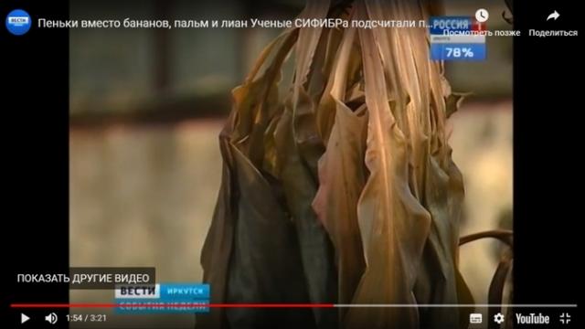 Коммунальная авария погубила сотни тропических растений в Иркутске