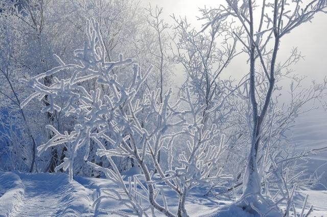 Алтайский край накроют морозы до минус 40°С