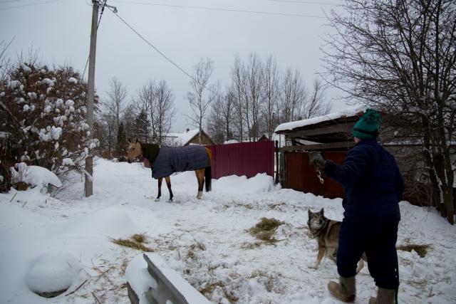 Несмотря на боль, лошади необходимо двигаться, так устроены её копыта. Они словно насосы качают кровь. Жанна выпускает лошадь за ворота, где Бася проводит пару часов. Иногда за это время она практически не сдвигается с места, приходится её заставлять