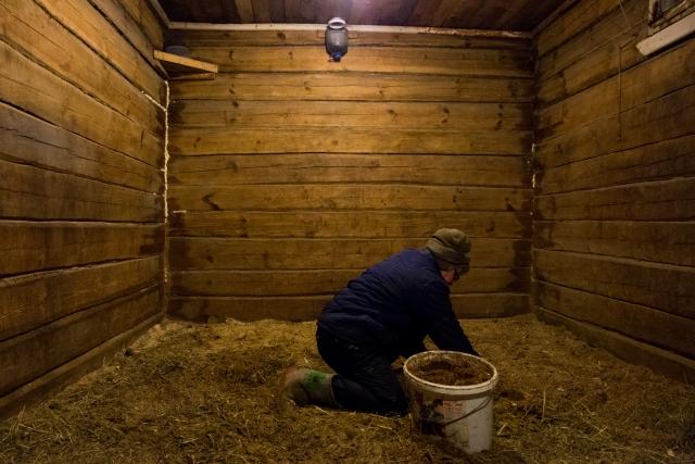 Чистота в деннике — обязательное условие жизни лошади. Неубранный навоз может вызвать сильное воспаление в больных копытах. Поэтому Жанна регулярно чистит грунт в деннике