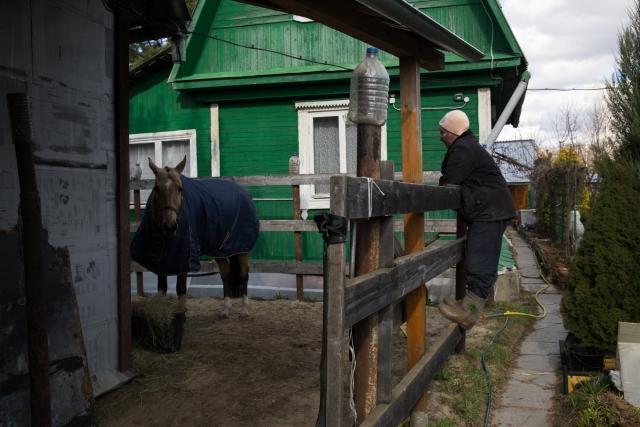 Весной, когда начала появляться первая трава, Жанна гораздо реже стала выпускать Басю за ворота. Лошади с ламинитом вредна молодая трава