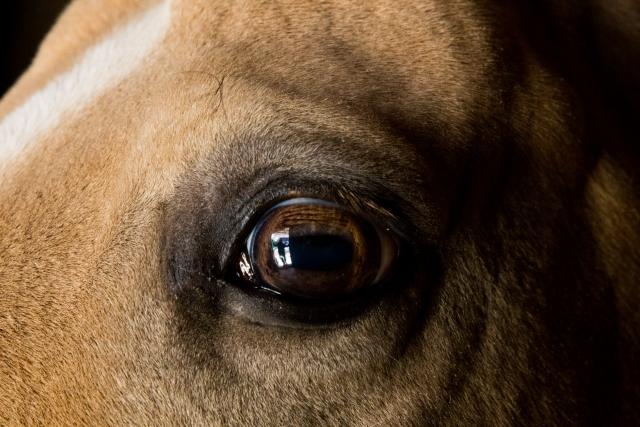 Бася понимает Жанну с полуслова, иногда ей достаточно просто посмотреть на лошадь, и та уже знает, что надо делать, куда идти или в каком настроении хозяйка