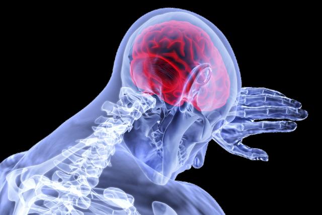 Ученые нашли связь между ожирением и размером мозга