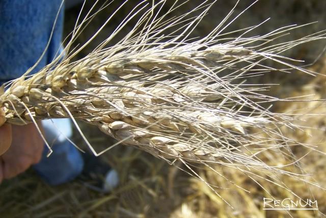 ЛНР: в республике достаточно зерна, чтобы не повышать цены на хлеб