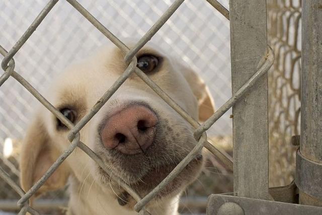 Бюджет Курской области на отлов бездомных животных составит 7 млн рублей
