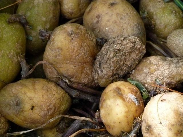 В Чечне расследуется дело о поставках гнилой картошки для Росгвардии