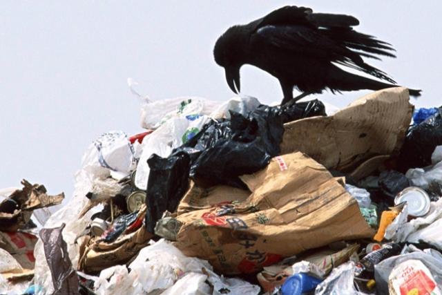 Ялта тонет в мусоре – в городе более ста несанкционированных свалок