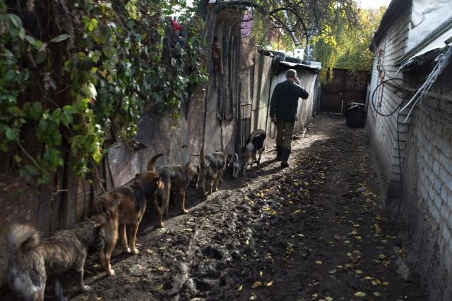 Стоит хозяину выйти из «служебного» вагончика, как стая собак тут же облепляет его со всех сторон и сопровождает, пока он идёт до кухни или пока обходит вольеры