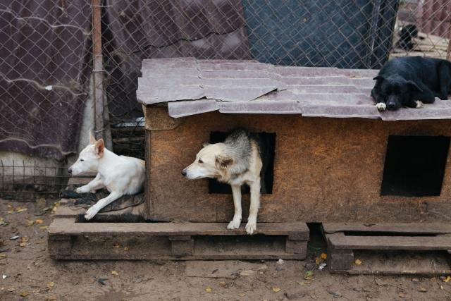 Некоторые собаки распределены по закрытым вольерам, а для собак, которые не могут жить на улице в морозы, зимуют в отапливаемых боксах