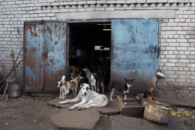 Большинство собак живут в общих открытых будках