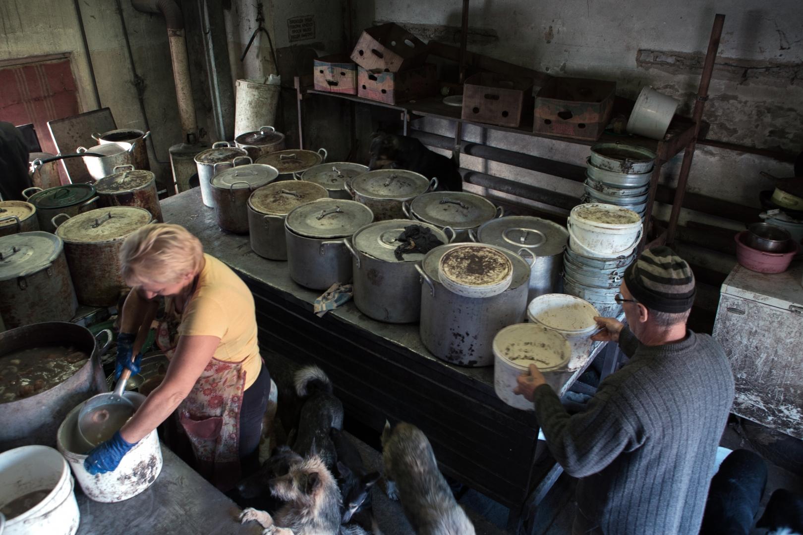 Собак кормят дважды в день. Для этого Юрий Иванович и его помощники готовят ежедневно до полутора тонн каши