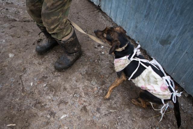Когда появляются средства на стерилизацию, волонтеры отвозят собак на операцию, затем возвращают их в приют. За 2018 год было стерилизовано около 60 собак