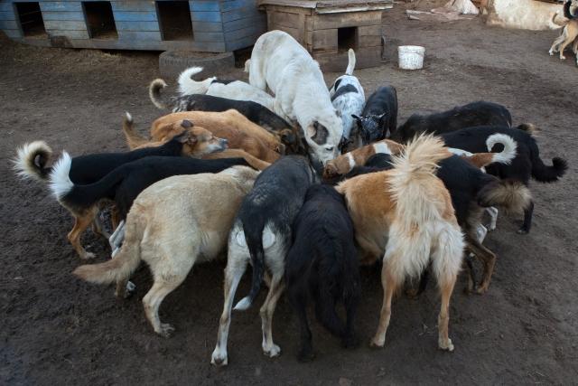 Собак кормят дважды в день