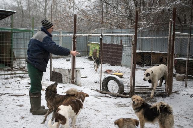 Конфликтов в таком большом «коллективе» не избежать, и если между собаками случается драка, Шамарин громогласно произносит: «А ну-ка! А вот сейчас ремень возьму!» и идет разнимать их. Собаки его слушаются и быстро разбегаются по сторонам