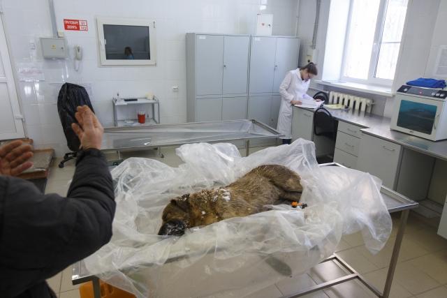 Случается, что собаки умирают очень неожиданно. За много лет Юрий Иванович научился распознавать разные недуги своих питомцев, в том числе и симптомы отправления
