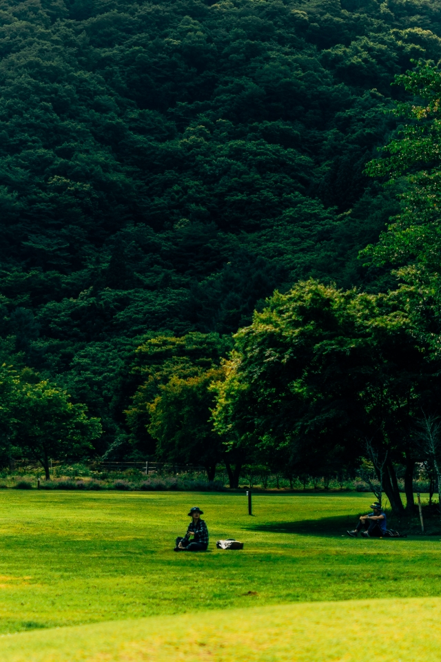 Поле возле леса самоубийц (Аокигахара)