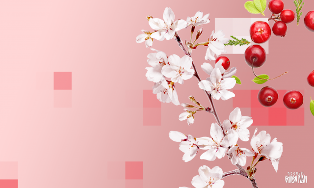 Цветущая сакура или развесистая клюква?