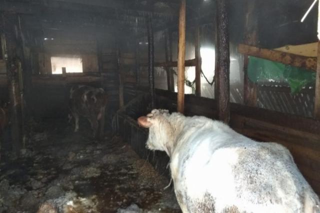 В Томске пожарные спасли из огня девять коров, 40 коз и овец