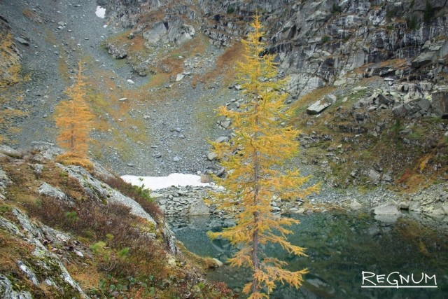 В Красноярске расшифровали геном лиственницы