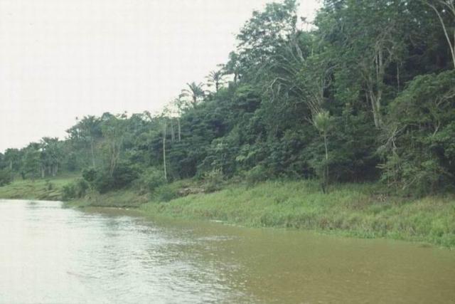 Амазонка [(cc) 1489;1503; 1492;1496;1489;1506;